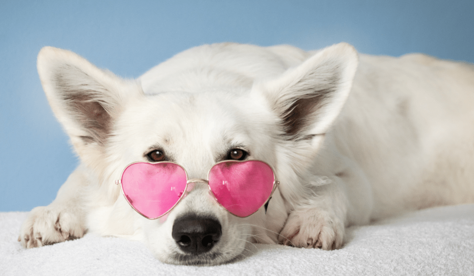 10 Secrets That Experts Of Dog Photography Don't Want You To Know