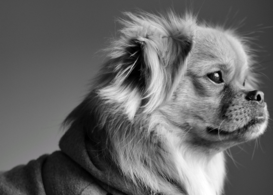 Everything You Need To Know About Black And White Dog Photography